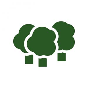 CarbonForest