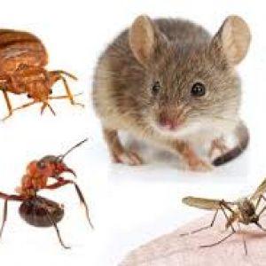 Pest Control Broadford