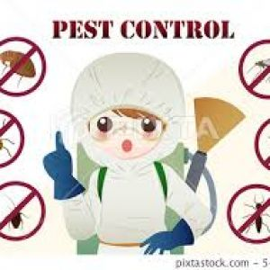Pest Control Burwood