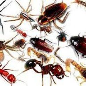 Pest Control Guildford